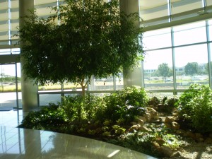 Benefits of Interior Landscaping