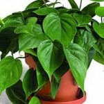 Improve Indoor Air Quality Using Plants