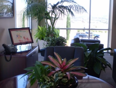 Indoor Plant Rental and Maintenance Costs Savings