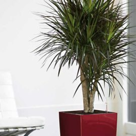 Our Suggested Indoor Plants That Use Less Water
