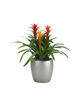 Yearly Indoor Plant Rental