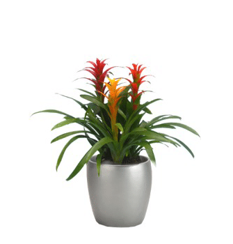 Rent or Buy Holiday Plants That Keep On Giving