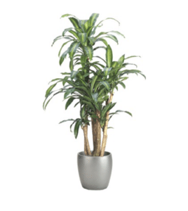 Indoor Plants Purify the Air