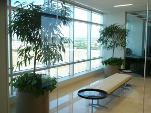 Commercial Indoor Plant Rental Irvine California