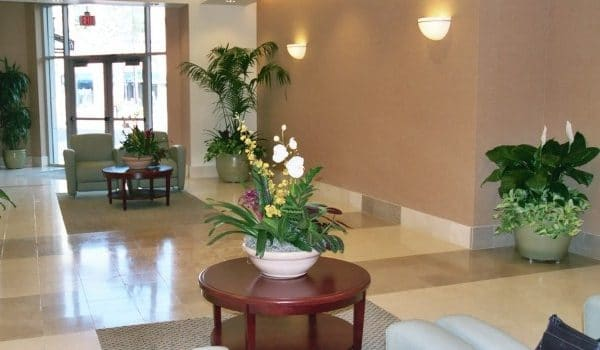 Indio Indoor Plant Installation and Maintenance