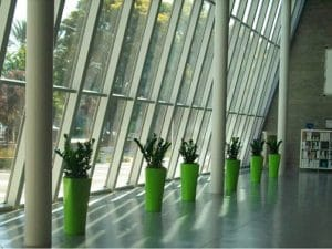 Commercial Indoor Plant Rental in Ontario California