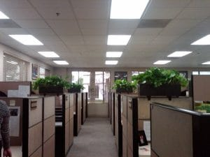 San Bernardino Living Indoor Plant Rental in Office