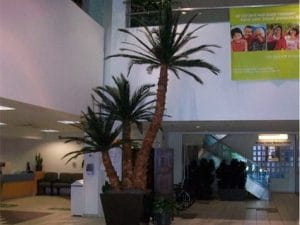 Indoor Plant Rental in Huntington Beach commercial building