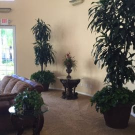 Rancho Cucamonga Indoor Plant Care For Freshness and Beauty