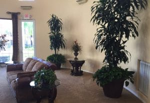 Live Indoor Plant Rental commercial account in Temecula California