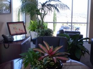 Commercial Indoor Plant Rental in Palm Springs