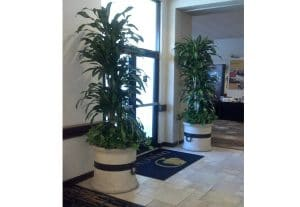 Interior Plants Change Office Work Spaces Into Engaging Work Places
