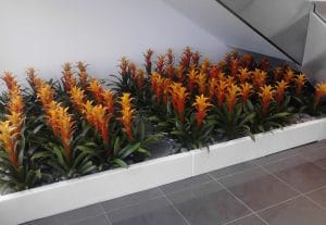 Indoor Plant Rental Bromeliads in Temecula California