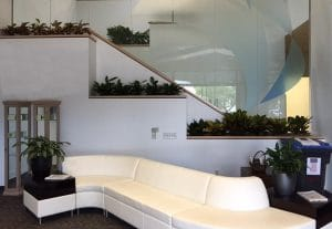 Interior Plant Design in Temecula California