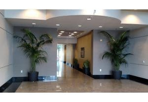 Corona California Interior Plants For Office Work Spaces