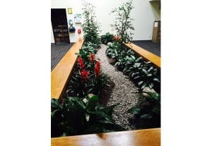 Commercial Indoor Plant Rental and Maintenance