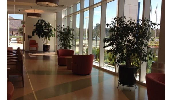 Office Plant Installation With Value-Added Care