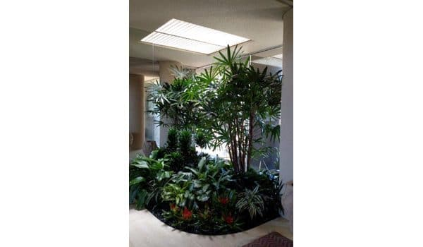 Palm Springs Indoor Plant Installation and Maintenance