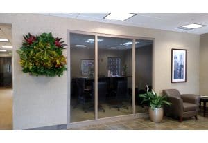 Southern California Indoor Plant Installation and Maintenance