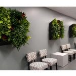 Corona Indoor Plant Installation and Maintenance