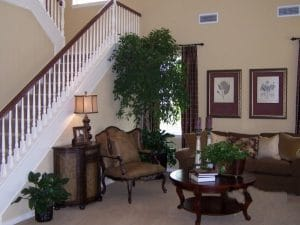 Residential Plant Rentals and Maintenance