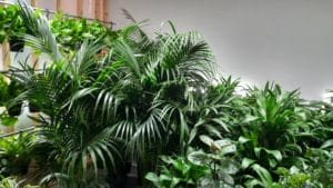 Plants Set the Stage and Tone for Better Living
