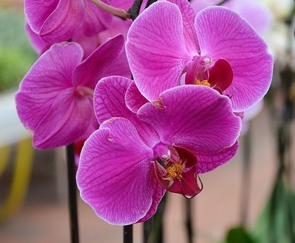 Mission Viejo Indoor Plant Installation and Care