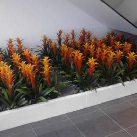 Temecula Indoor Plant Installation and Care