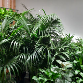 Do I need to take my plants outside at any time?
