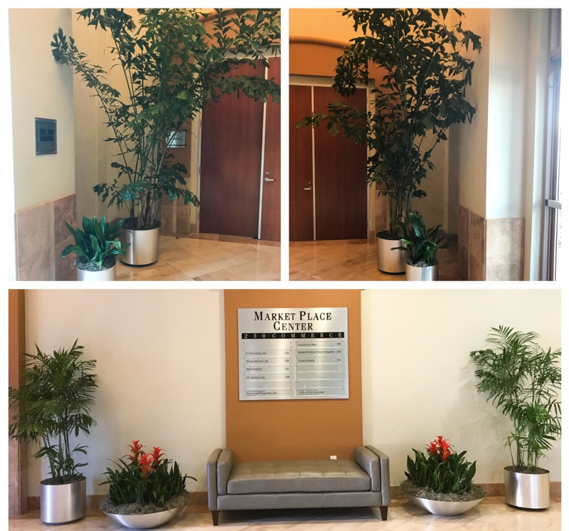 Plants for businesses, southern California