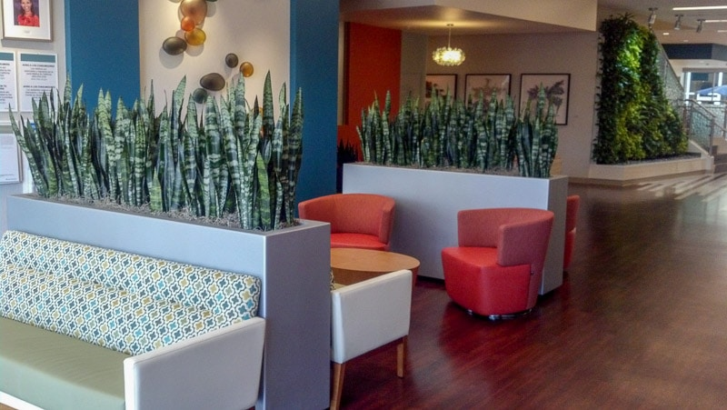Indoor Plant Care For Businesses In Riverside San Bernardino Orange County