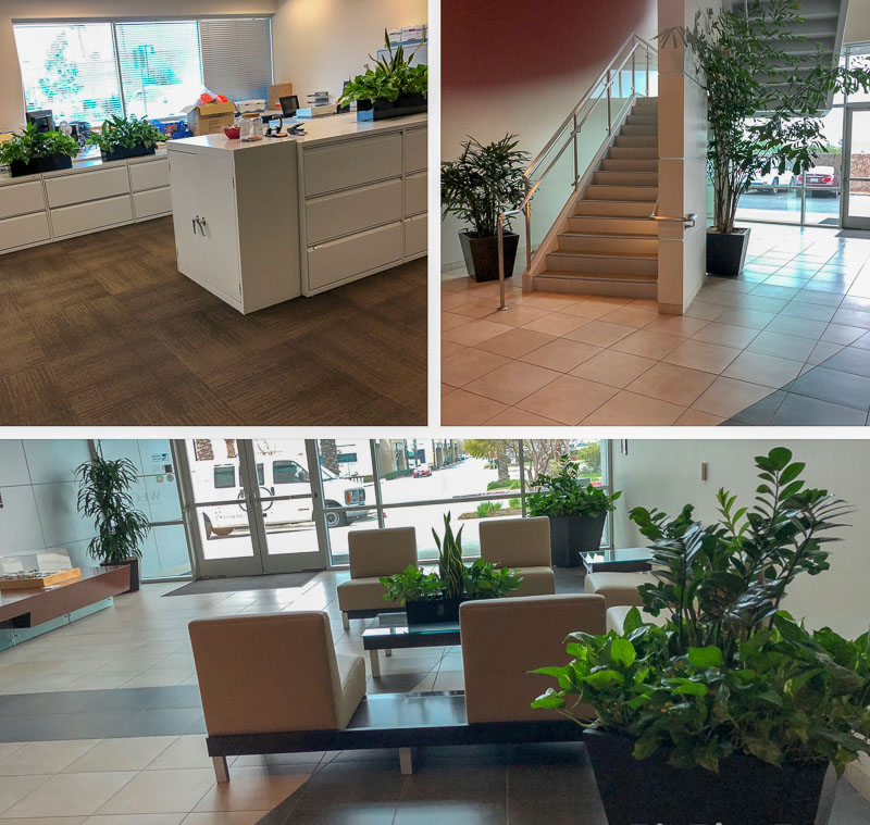 Indoor-plants for business at WLC ARCHITECTS, INC in Rancho Cucamonga CA