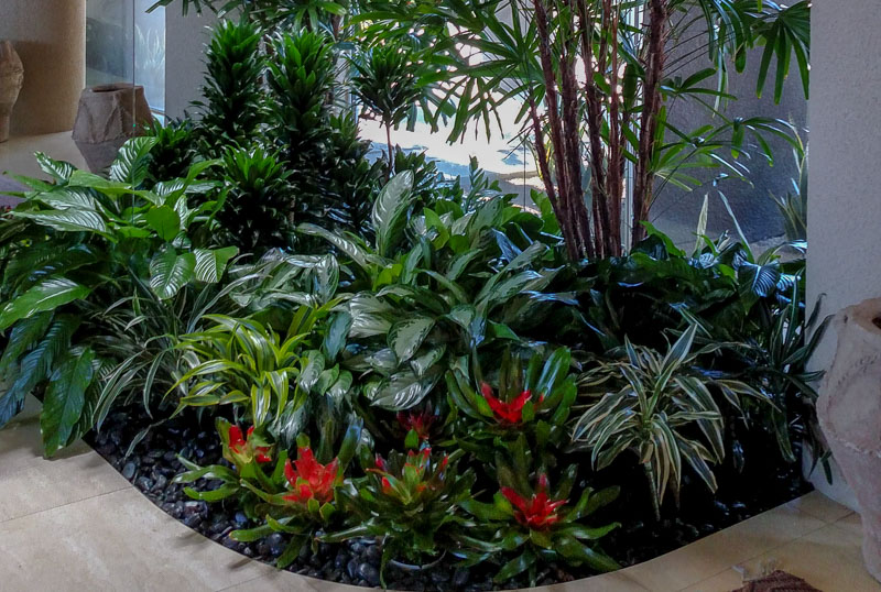 Do Indoor Plants need fertilizer, ask plant expert