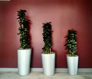 Commercial Office Plant Rentals in Riverside County and San Bernardino County