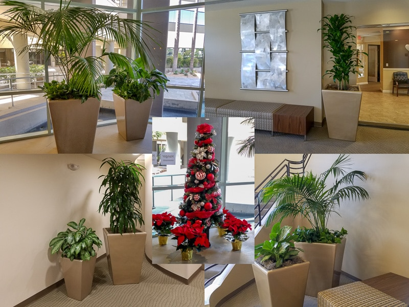 Indoor Plant Services by Inside Plants at Palmbrook Center in Ontario, California