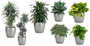 Plants and Planter Variety for Your Indio Personal Space