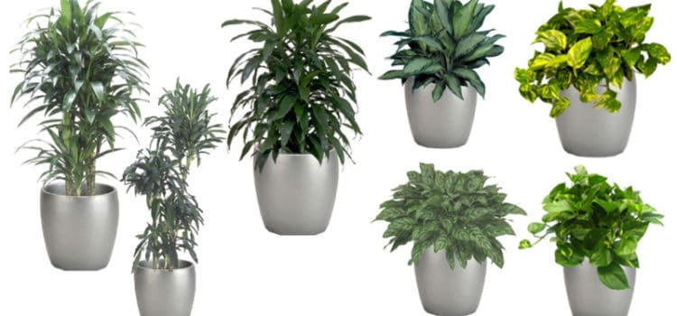 What are the best plants for my house?