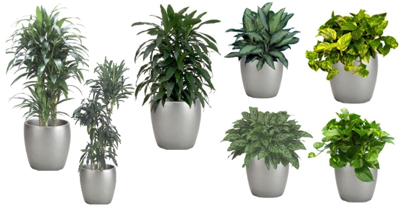 What Are The Best Plants For My House