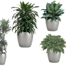 Plant Care Questions best plants