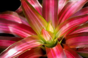 Tropical Indoor Plants Bring the Tropics to Your Indio Business