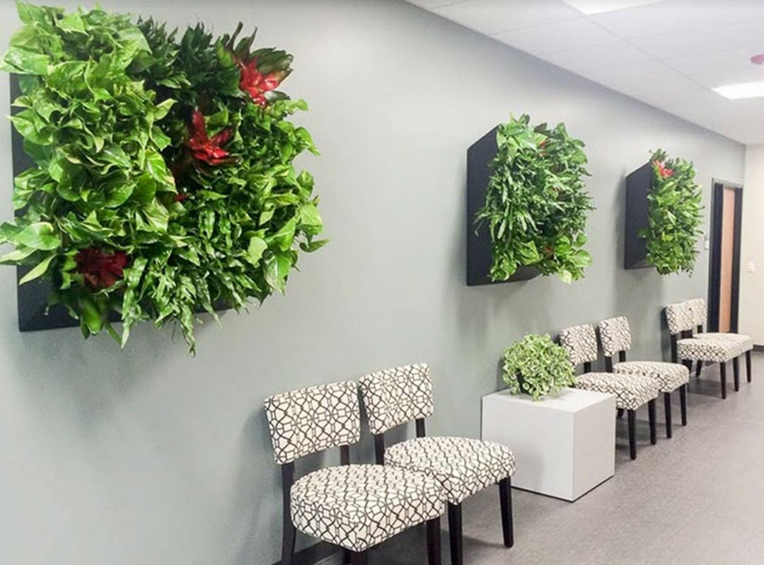 Workplace Plants Benefits Best Office Plants