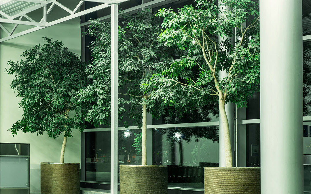 Workplace Plants Benefits Indoor Plant Service