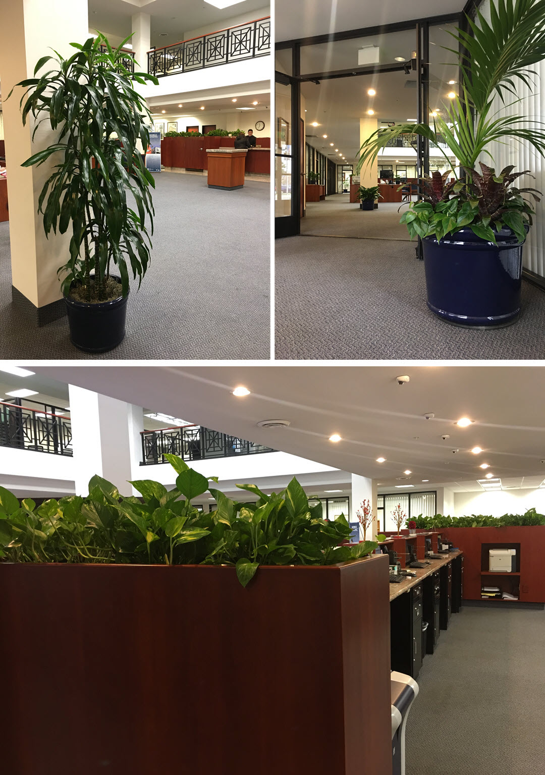 Biophilic Design Benefits Chino Commercial Bank Inside Plants
