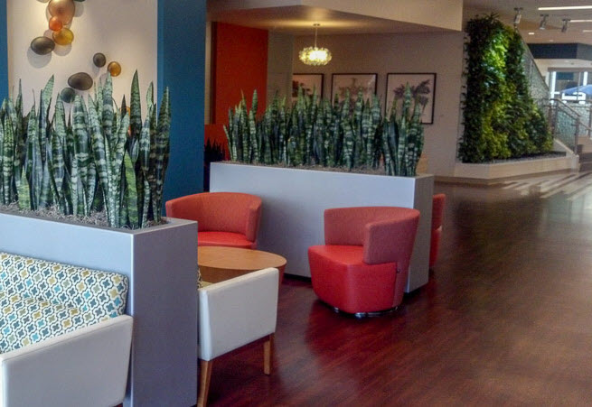 biophilic design benefits indoor plant care for businesses southern california