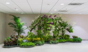 San Bernardino County Commercial Indoor Plant Service for Lobby