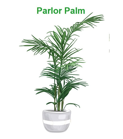 best indoor plants for cold office parlor palm