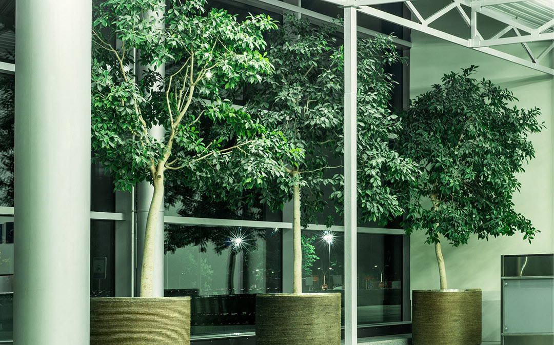 indoor plants purify the air detoxify