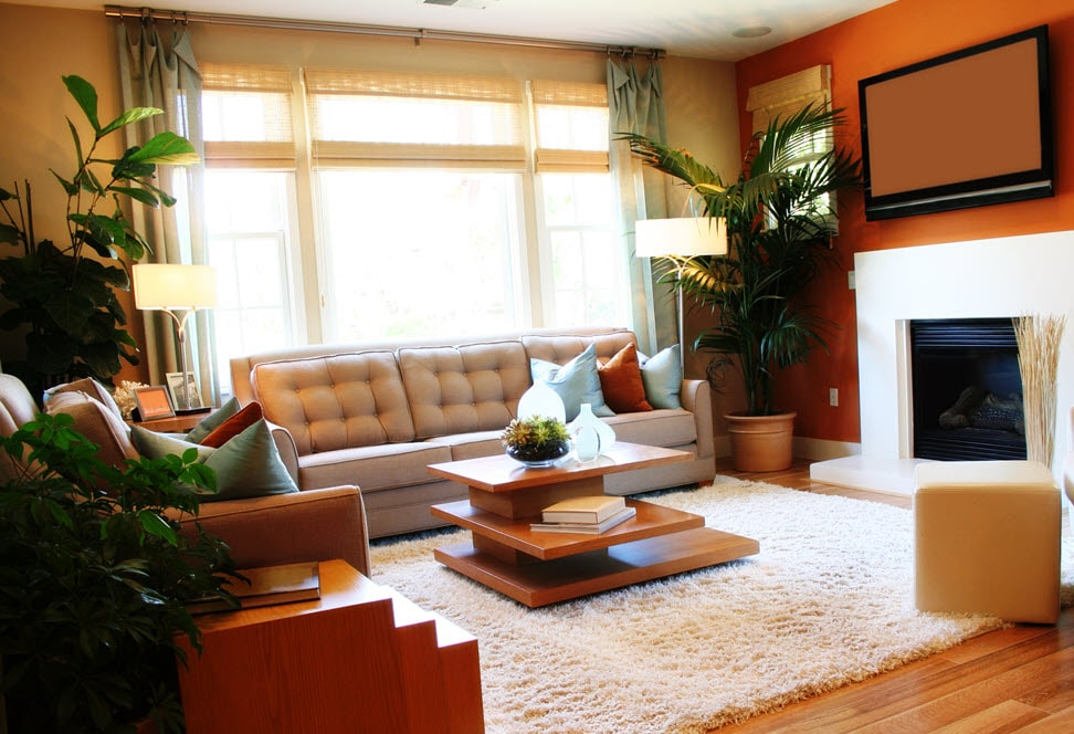 indoor plants purify the air home
