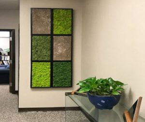 Plant Walls can take up little space and Clean the Air you Breathe