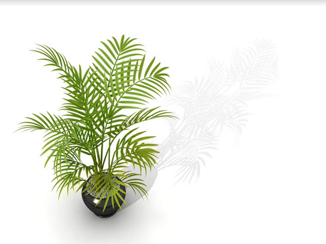 plants for low light rooms bamboo palm